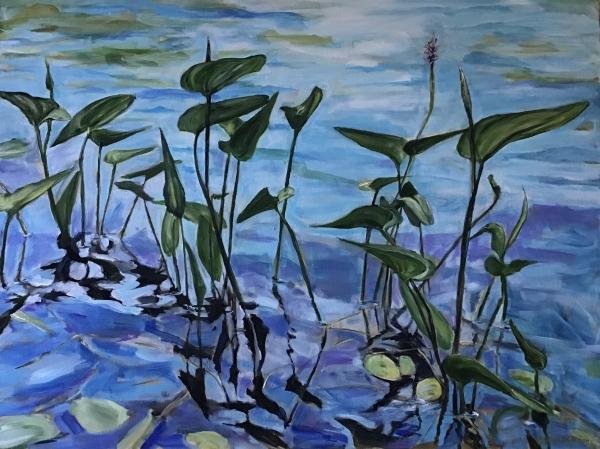 west bay waterlillies